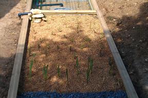 Le jardin est composé essentiellement de joncs, iris et roseaux